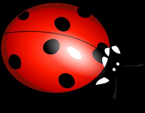 Ladybug_PNG3962